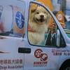 BENE – Guidedog